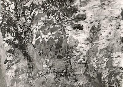 Le pin à Grimaud