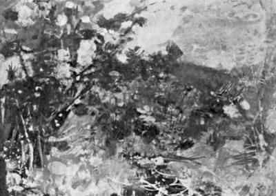 Le mimosa, paysage des Maures